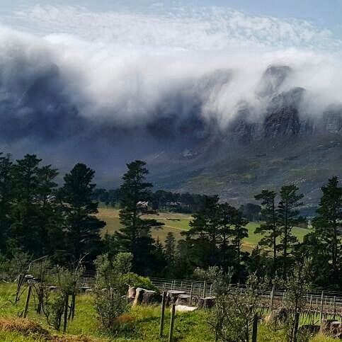 Views of the Hottentots-Holland mountain range from Wedderwill Estate - Somerset West - Cape Town #Wedderwill #SomersetWest