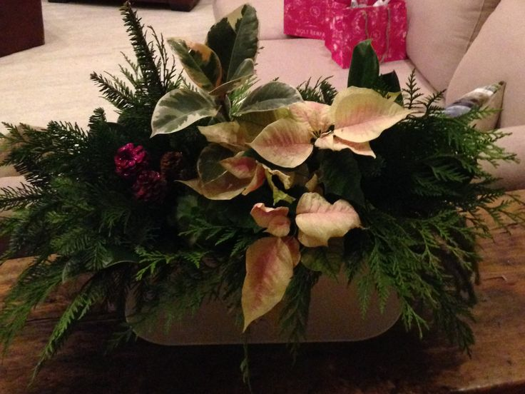 Noël en fleurs