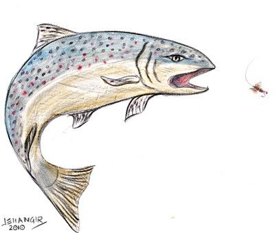 trout images - Google Search