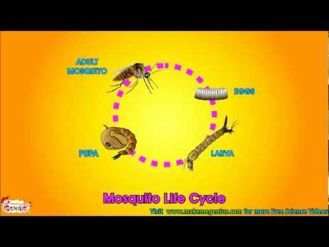 Life Cycle  Video for Kids - Science for Kids - from makemegenius.com