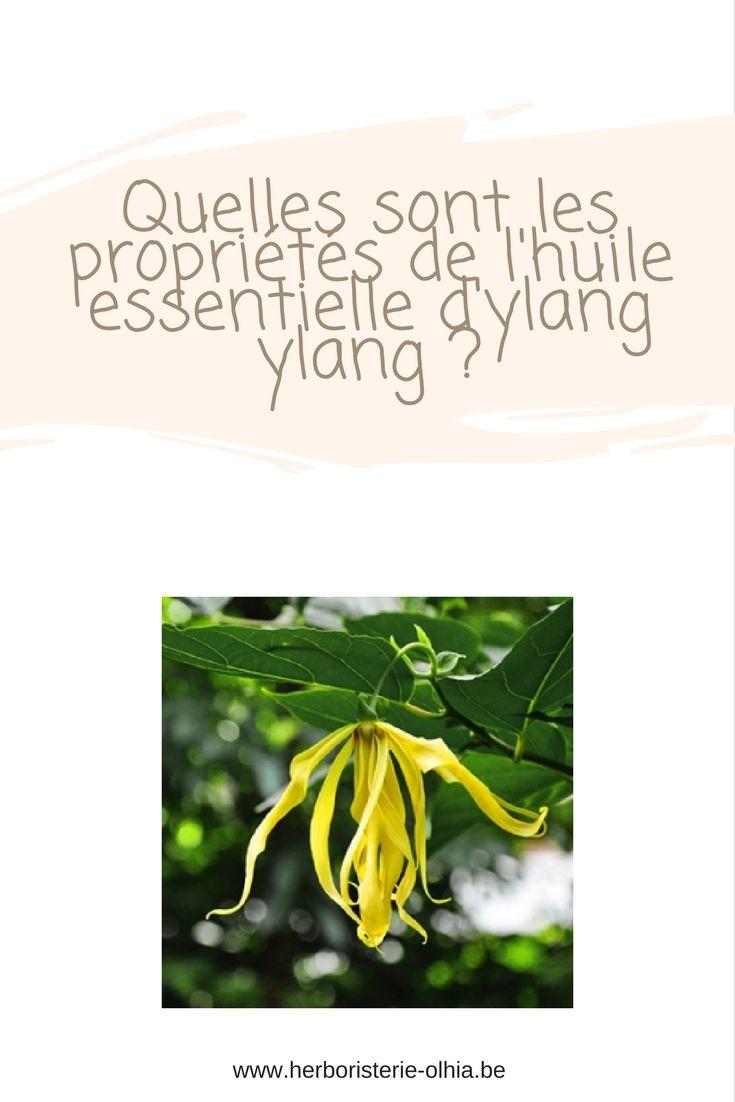 L'huile essentielle d'ylang ylang (Cananga odorata) est originaire d'Asie. A l'état sauvage, cet arbre peut atteindre jusqu'à 20 m de hauteur.  Les fleurs jaunes de l'ylang ylang sont facilement identifiables et ce sont elles qui donne l' huile essentielle dont l'odeur est souvent très appréciée.