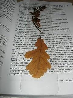 Dried plants bookmark
