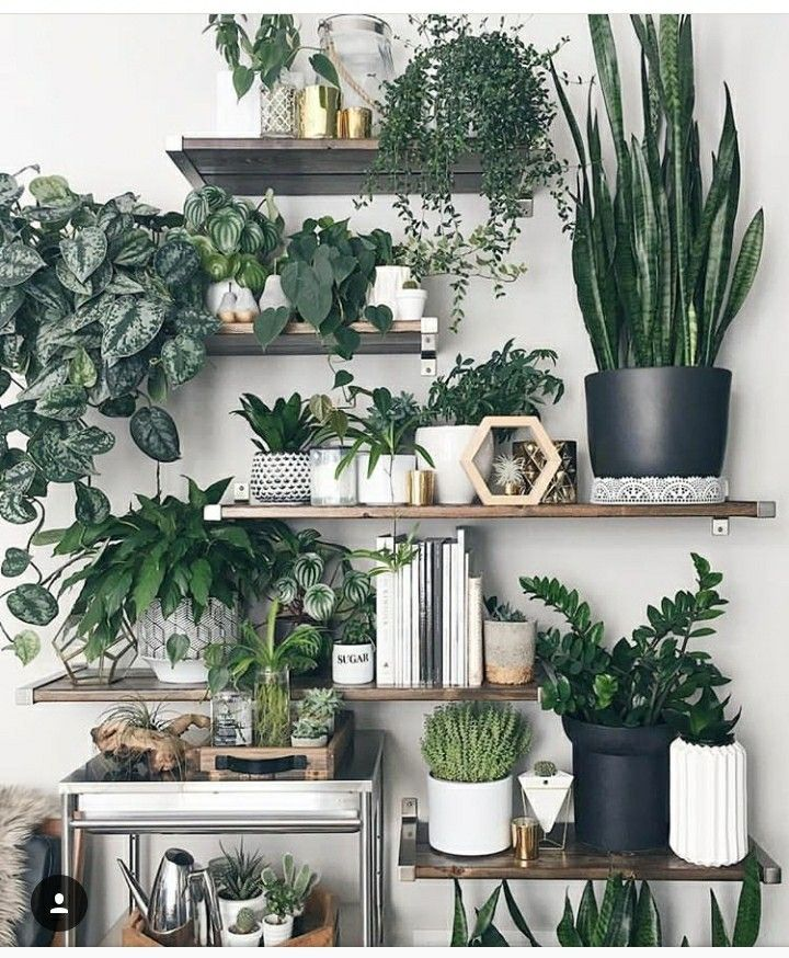 Inspiring Very Green Wall Homedecore Plants Greenery Green Greendecor Plant Decor Plants House Plants