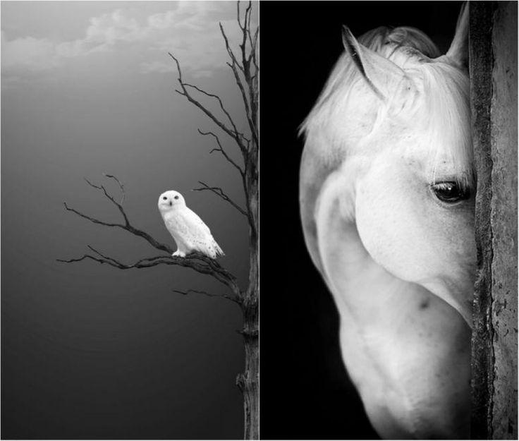 Karanlıktan Aydınlığa: Başınızı Döndürecek 21 Siyah Beyaz Fotoğraf