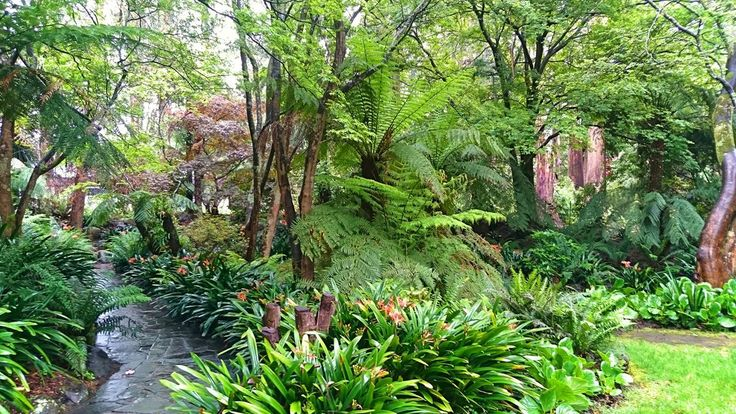 Alfred Nicholas Gardens, Victoria, Australia. Set in the Dandenong Ranges. Famed for superb autumn colour and spring flowers.