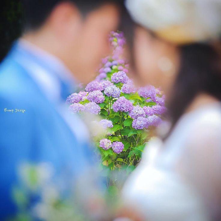 #あじさい に ピントを合わせた一枚も  紫陽花って桜と違って 長く楽しめて  いいですよね   #プレ花嫁 #日本中のプレ花嫁さんと繋がりたい #結婚式準備 #ドレス試着 #前撮り#ウェディングフォト#ロケーションフォト#ウェディングドレス #卒花嫁#卒花#チェリフォト  #エンゲージリング#プロポーズ#ウェディングソムリエアンバサダー#東海プレ花嫁#東京カメラ部 #名古屋花嫁#はなまっぷ紫陽花2017