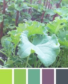Colour palette - vegetables