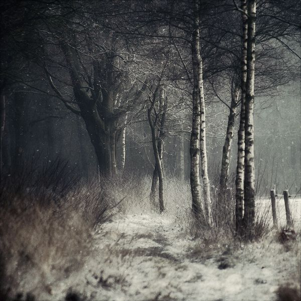 : Photos, Stunning Photography, Birches, Winter Is Coming, Dark Forests, Trees, Winter Tales, Wooden Doors, Natural