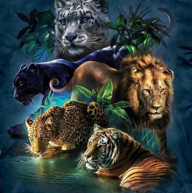 Big cats ~ one of my biggest dreams when I get older is to open a cat zoo, after I get my doctorate in Psychology. I want to open this cat zoo for rehabilitation to all different types of cats, such as tigers, lions, cheetahs, etc.