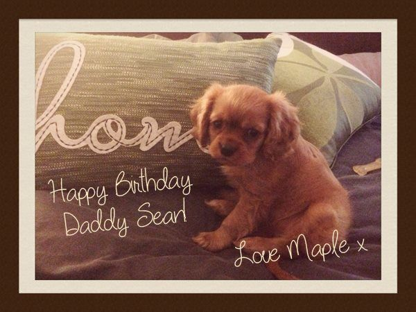 Maple - photo taken on my birthday - she is 9 weeks old in the photo :) xx