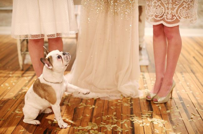 bedazzled dog, glittering guests