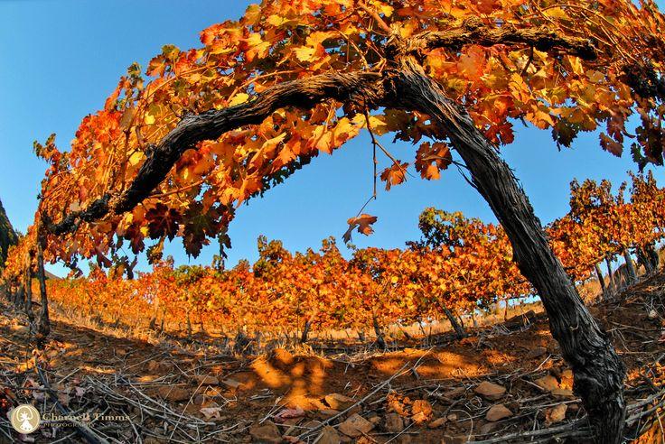 'Autumn Harvest' - South Africa