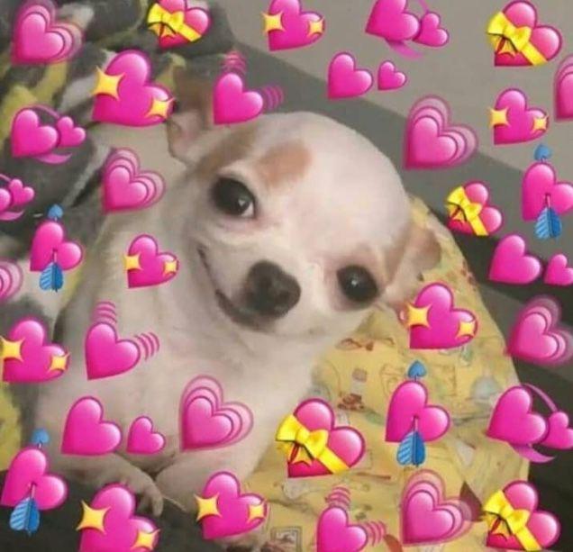 Pin By Shast On Memes Cute Love Memes Cute Memes Love Memes