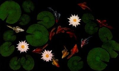 """Koi Pond 7"" by Duane Armstrong"
