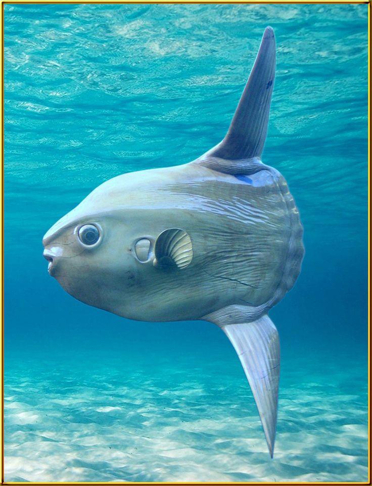 Mondfisch von Pascal Baur