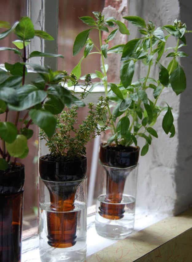 Bottle Gardens | Fun and Easy Indoor Herb Garden Ideas