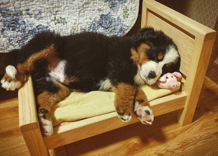 Is Your Pup Getting Bigger And Needs New Bed See More Cool Ideas At Www