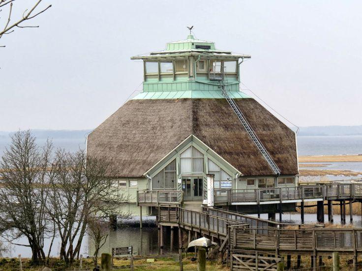 SKÅDA! Fågel, natur, kultur på Österlen: Ett februaribesök i Hornborgasjön