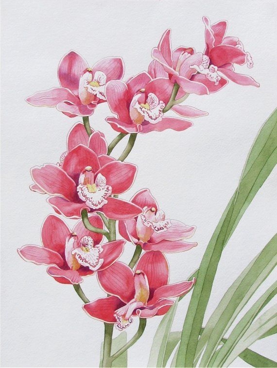 Original Watercolor Painting Of A Pink Cymbidium Orchid Flower Etsy In 2020 Pink Watercolor Flower Flower Art Floral Painting