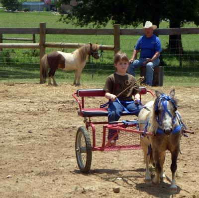 My son cart driving our miniature horse