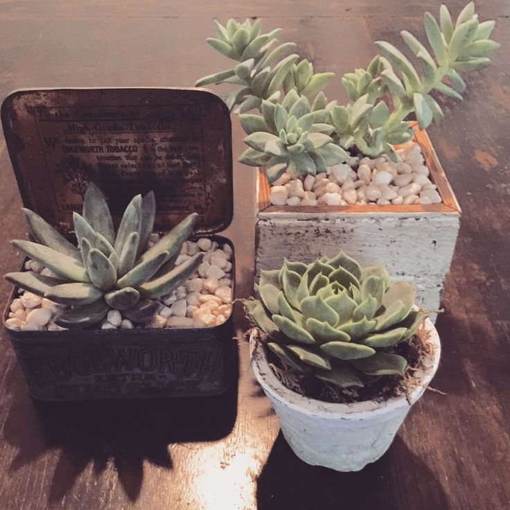 1000 Images About Salvage Ideas On Pinterest: 1000+ Images About Salvage Succulents
