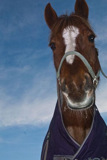 Horses at Equstom