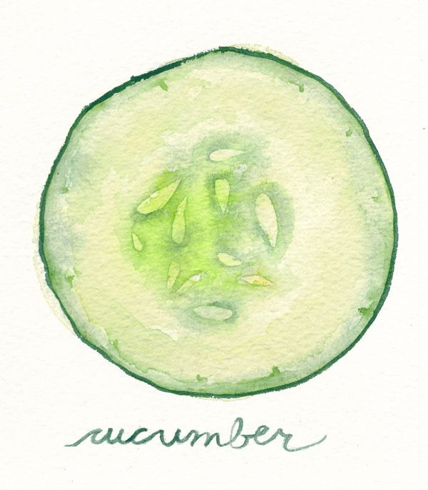 cucumber by Renee Leigh Stephenson, via Behance