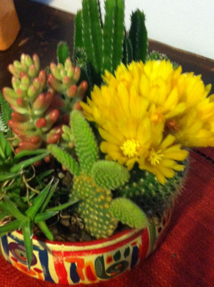 The cactus is bloomin'...
