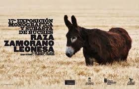 Afbeeldingsresultaat voor zamorano-leones donkey
