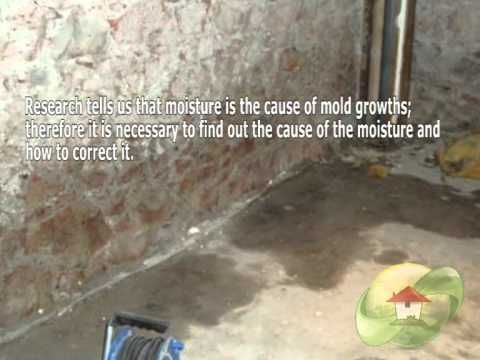 Pin by Master Care Restoration Company on Mold remediation ...