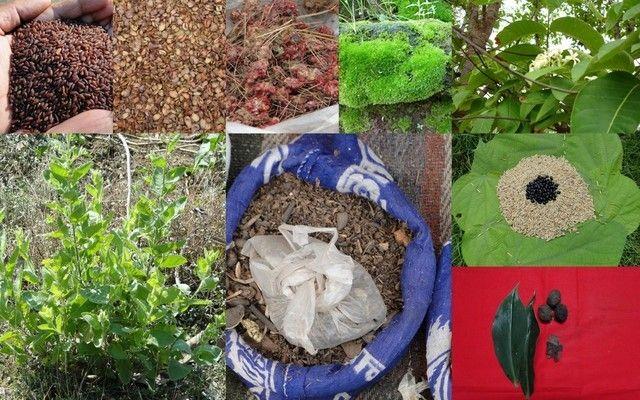 Medicinal Rice_-, I_PAO248992