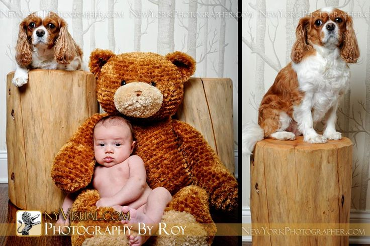 newborn pictures ny - Bing Images