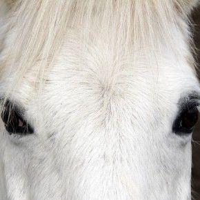 Per capire se una persona è arrabbiata, a un cavallo basta una fotografia. E' quanto hanno scoperto alcuni psicologi inglesi che hanno sottoposto a 28 destrieri le immagini di uomini con espressioni felici o infuriate