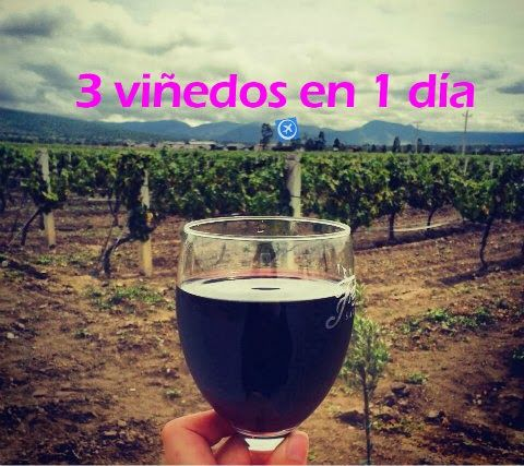 Tour: 3 viñedos en 1 día Ezequiel Montes Querétaro: Cata de Vino y mucho más! viajabonito@gmail.com