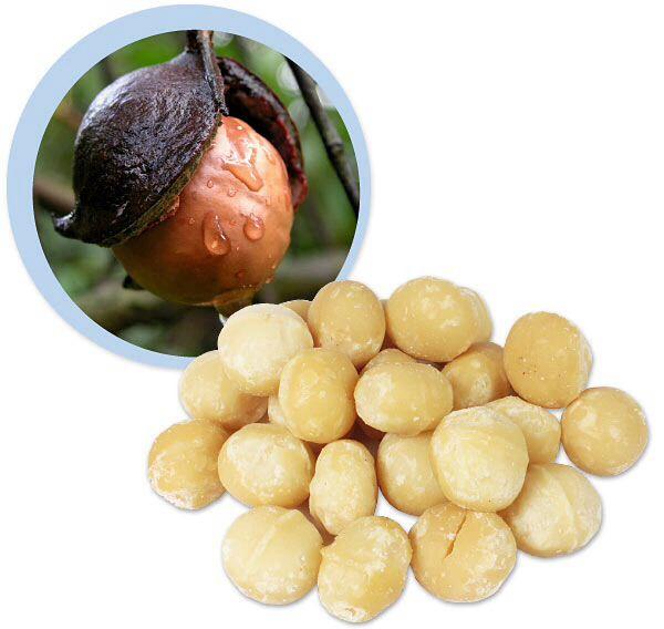 RAUWE MACADIAMIA's. Macadamia's zijn een rijke bron aan vitaminen. In 1 ons macadamia's zit 100% van de Aanbevolen Dagelijkse Hoeveelheid(ADH) aan thiamine of vitamine B1.