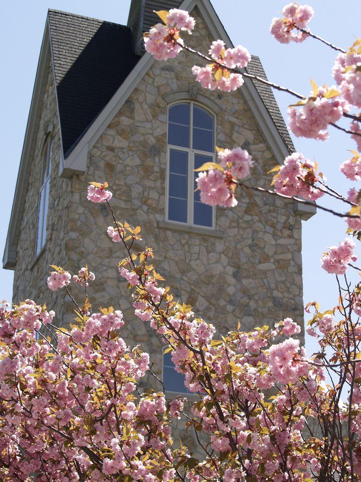 Vineland Estates Winery - Springtime