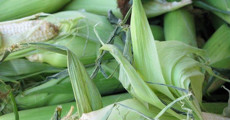 Ventajas y beneficios de un OGM . Los organismos genéticamente modificados u OGM, son organismos vivos modificados mediante la ingeniería genética. El propósito de crear OGM es para combinar genes beneficiosos de diferentes organismos en uno solo con el objetivo de consumirlo como fuente de alimento. El uso de OGM en la agricultura tiene muchos beneficios potenciales.