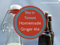"""Learn how to home ferment your own ginger ale soda (aka ginger beer) using a """"ginger bug"""". It is easy, delicious and you know EXACTLY what's in it."""