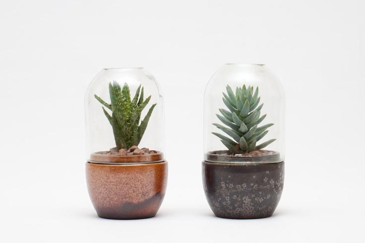 Best 25 terrarium supplies ideas on pinterest small for Terrarium supplies