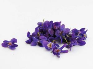 violets-341682_1280