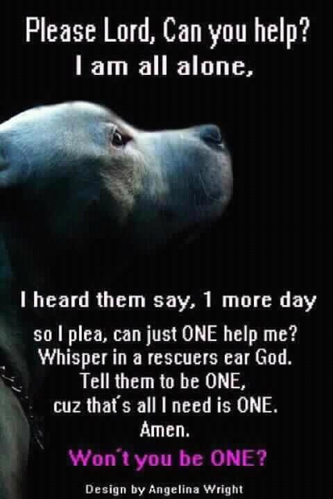 A shelter dogs prayer. Please, adopt don't shop.                                                                                                                                                                                 More