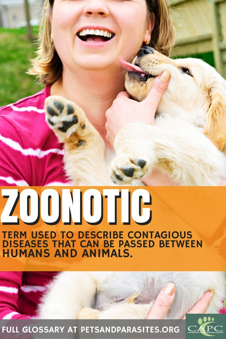 Definition of zoonotic. More terms listed at