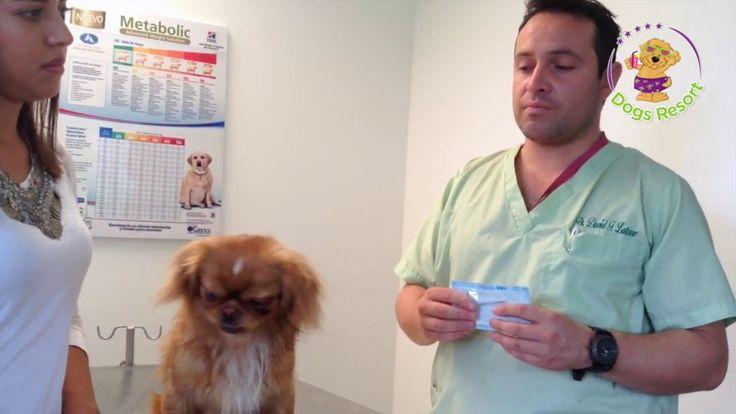Dogs Resort instala microchip