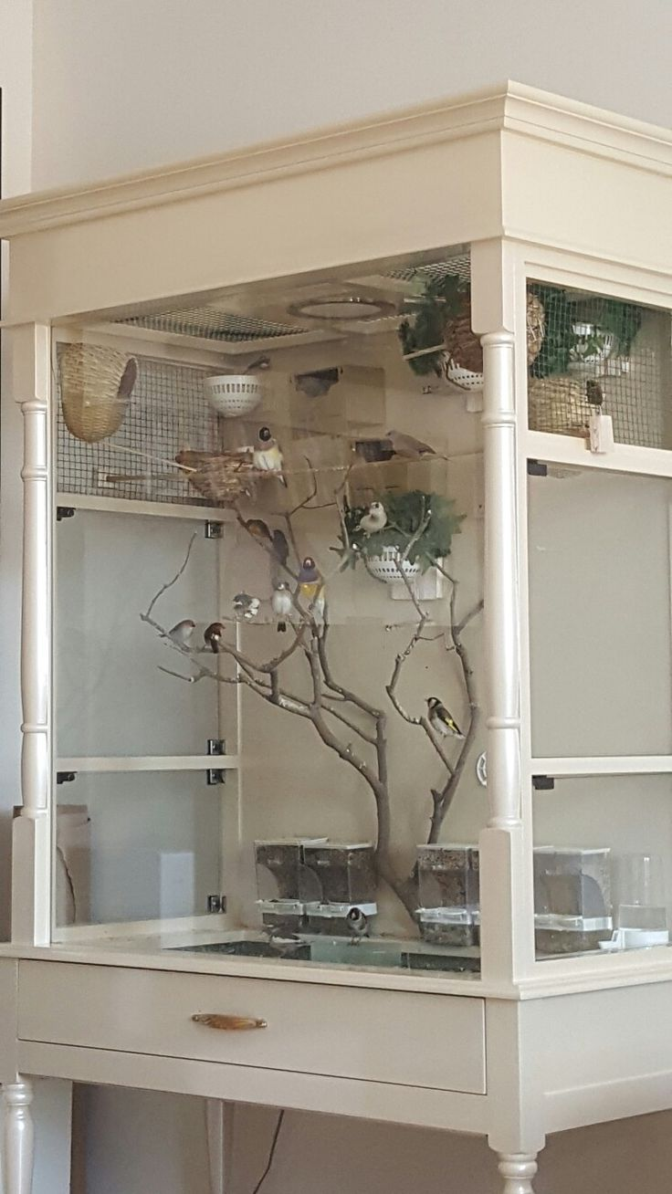 My indoor aviary and birds