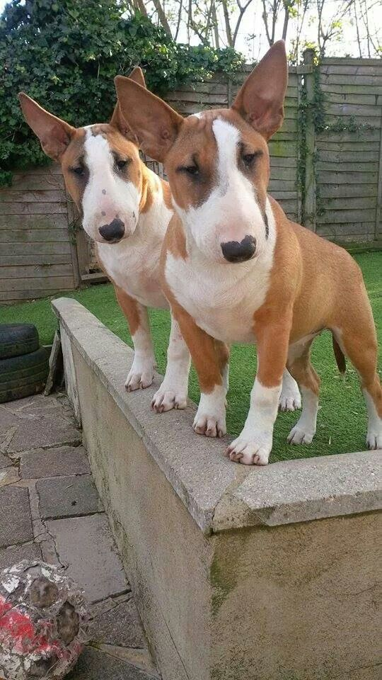 double trouble - they look like they'd keep you hopping :-)