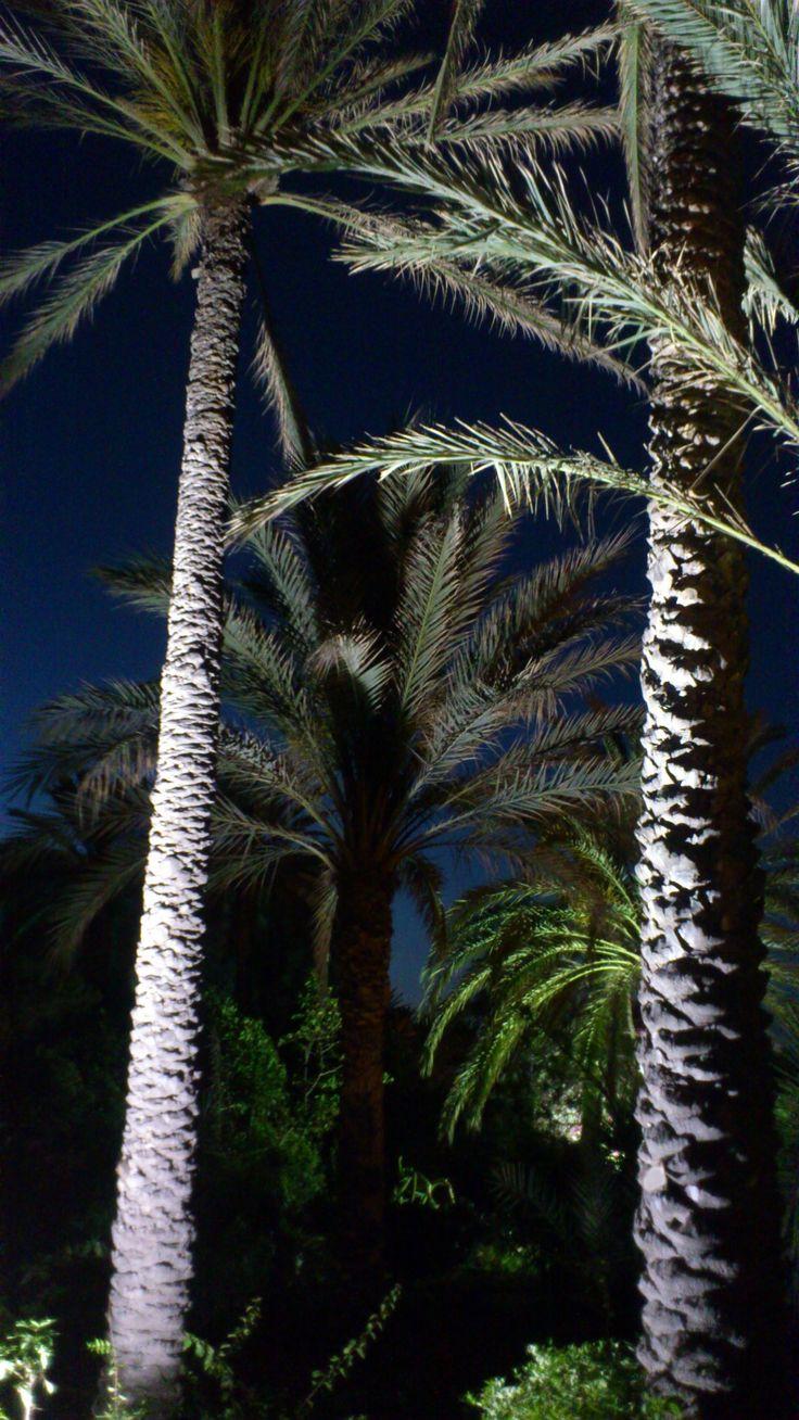 beleuchtete Palmen Tunesien,Sousse