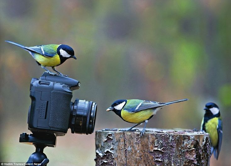 Be An Expert Wildlife Photographer In One Simple Step