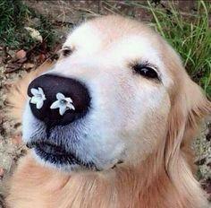 鼻に花が咲いた