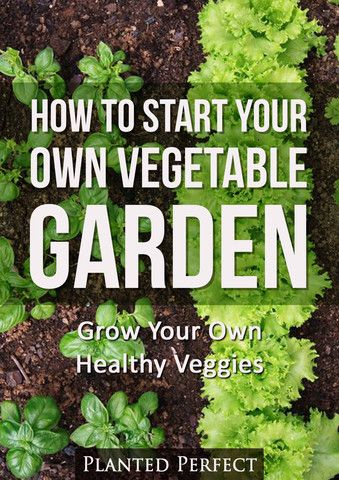 Start your own veggie garden and begin growing scrumptious vegetables for your family and home table.