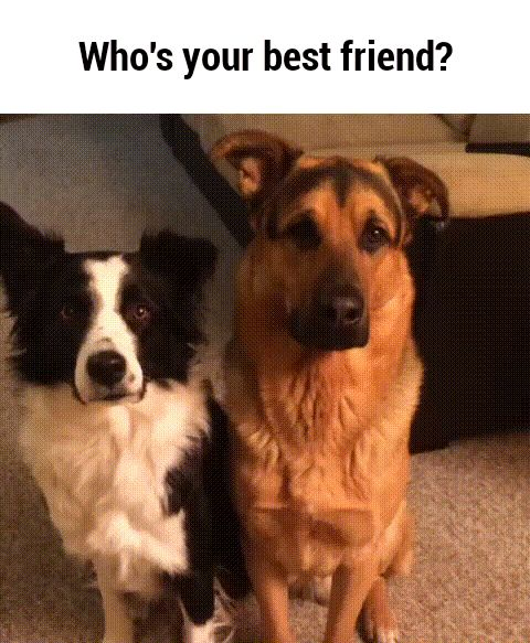 Who's your best friend? GIF